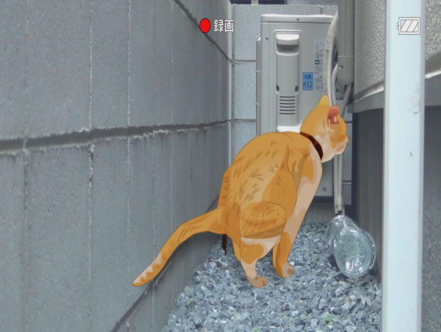 猫の糞画像03