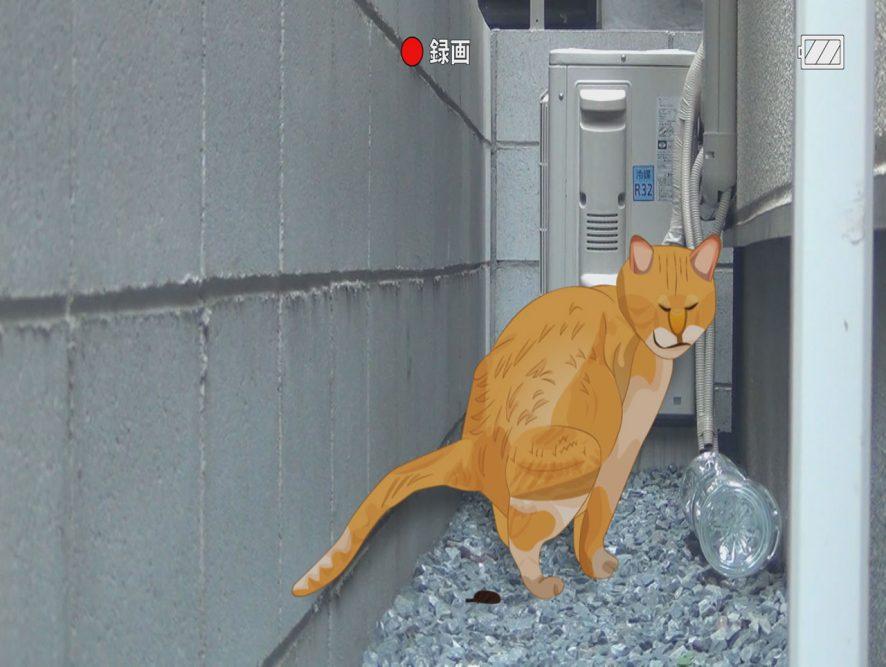 猫の糞画像04