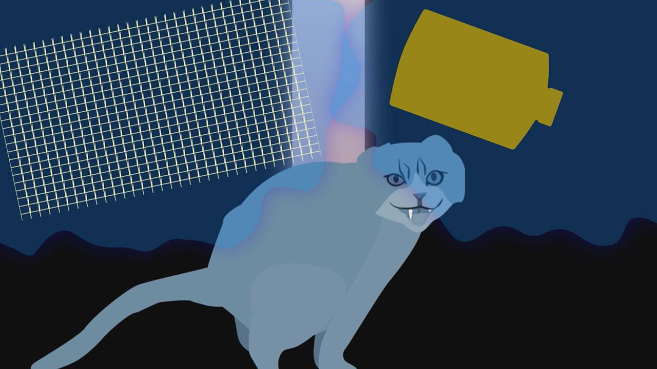 野良猫のフン被害をどうにかしたい