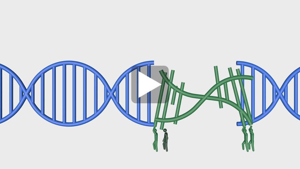 ゲノム編集b